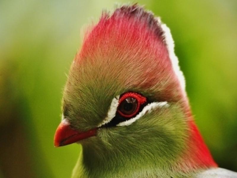 Clínica de Veterinário de Aves Vila Formosa - Veterinário 24 Horas