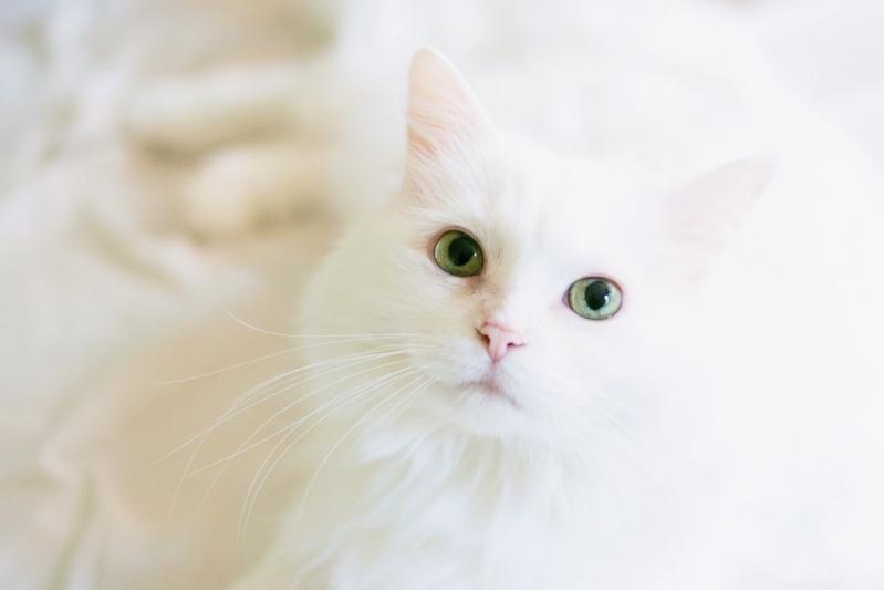 Clínica para Emergência para Gatos Jardim do Vovô - Emergência de Pequenos Animais