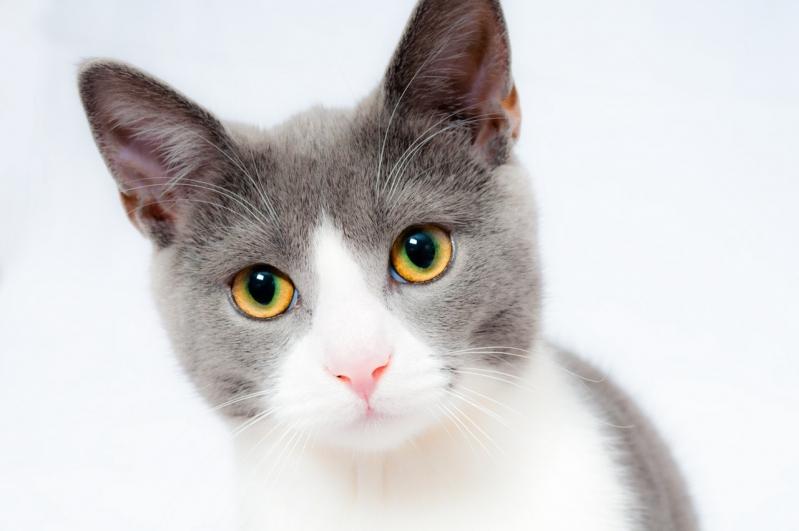 Clínica Veterinária para Animais Parque Fazendinha - Clínica Veterinária para Emergência