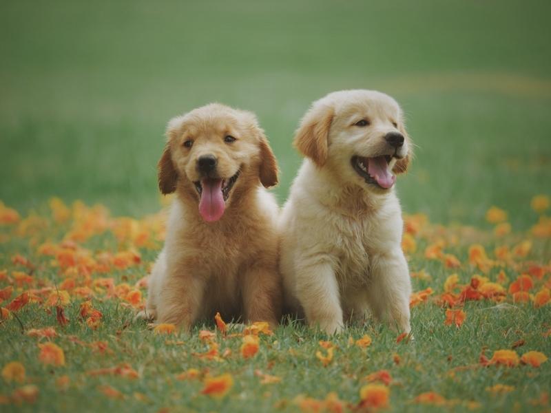 Clínica Veterinária para Cachorro Vila San Martin - Clínica Veterinária