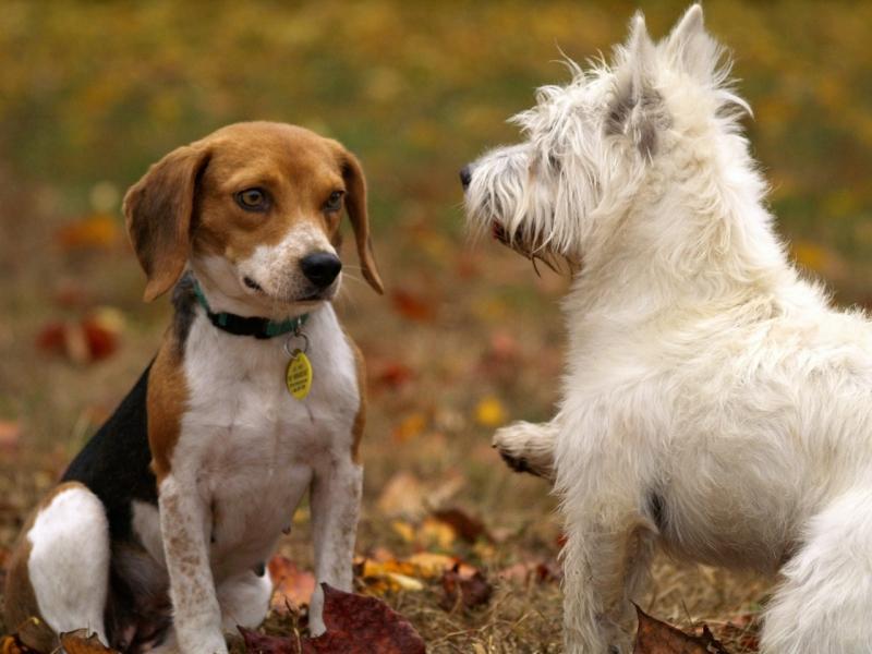 Clínica Veterinária Particular 24 Horas Jardim Amazonas - Clínica Veterinária para Cachorro