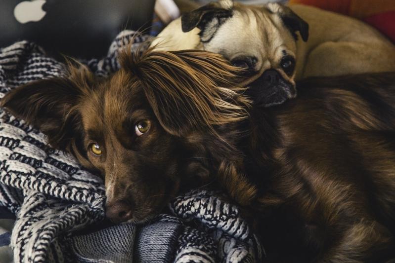 Comprar Vacina Veterinária V10 para Cães Vila Gênesis - Vacina para Cães
