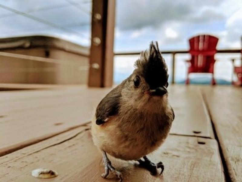 Consulta Veterinária para Aves de Emergência Jardim do Trevo - Consulta Veterinária para Animais Idosos