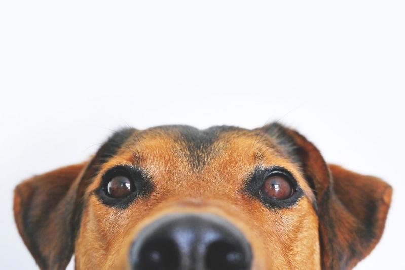Consulta Veterinária para Cães de Emergência Vila Campos Sales - Consulta Veterinária com Internação