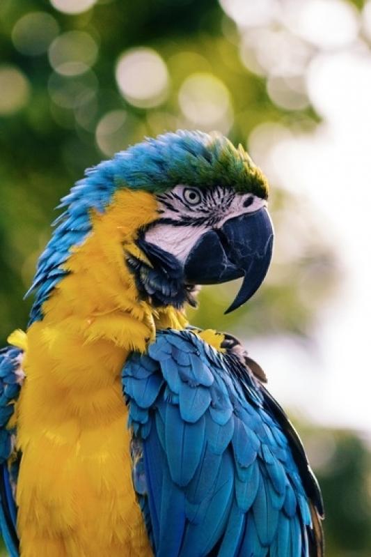 Consultas Veterinárias para Aves Jardim São Carlos - Consulta Veterinária para Animais Silvestre