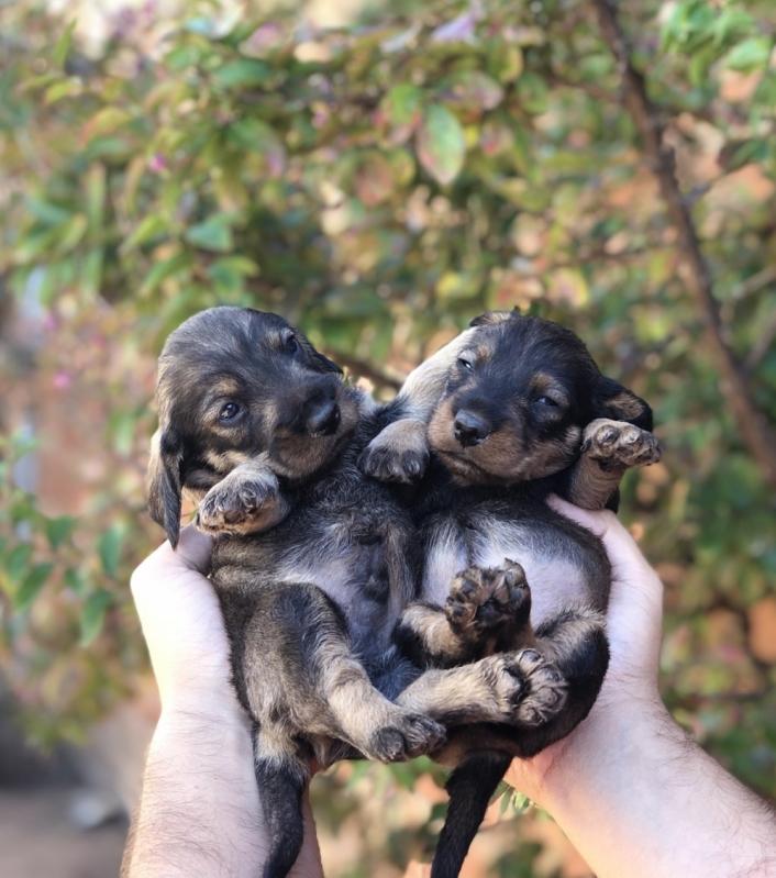 Emergência de Pequenos Animais Valores Parque São Jorge - Emergência para Animais 24 Horas