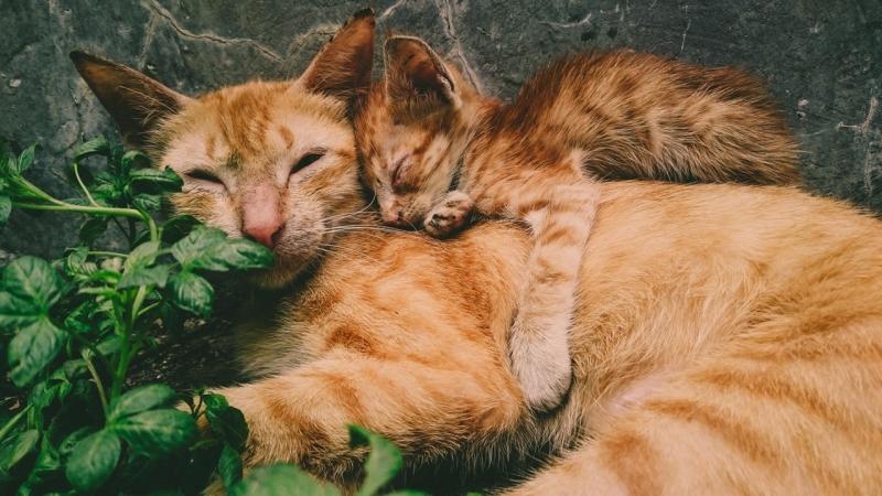 Emergência para Animais Jardim São Rafael - Emergência para Animais 24 Horas
