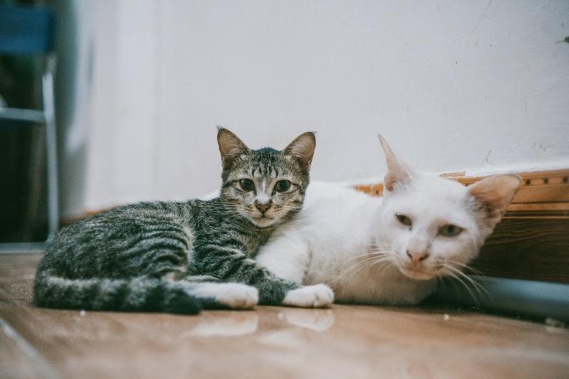 Emergência para Gatos Valores Vila Nova - Emergência Canina