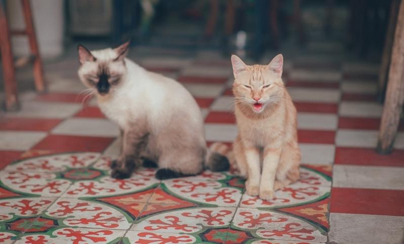 Emergência para Gatos Jardim Fernanda II - Emergência Animal