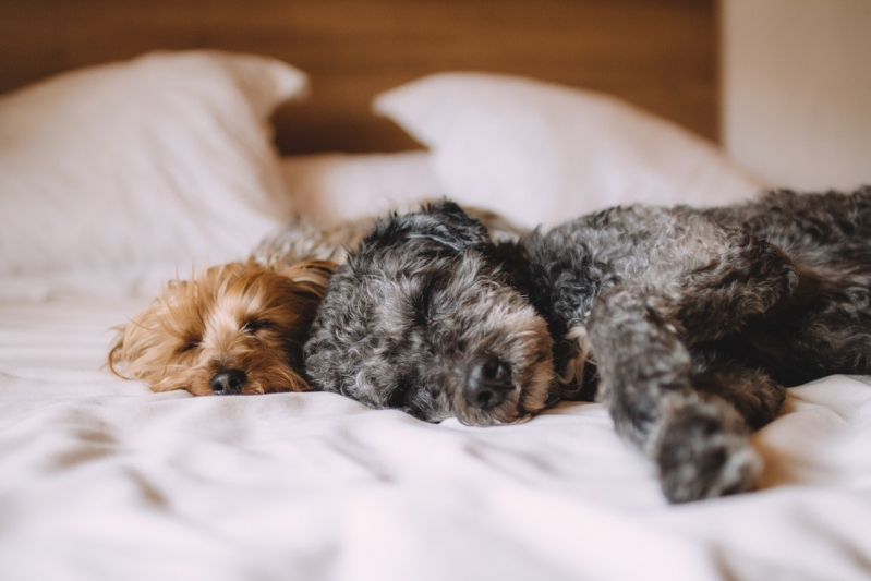 Emergências Canina Jardim Santa Mônica - Emergência de Pequenos Animais