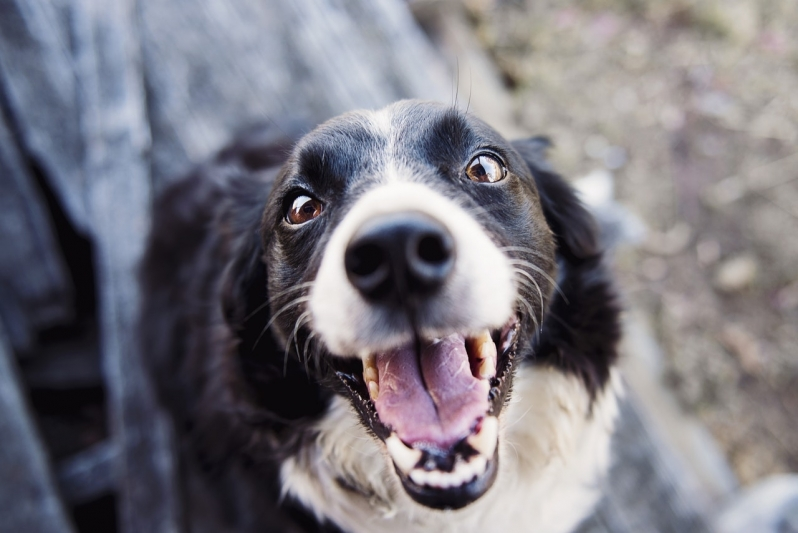 Emergências para Cães Botafogo - Emergência de Pequenos Animais