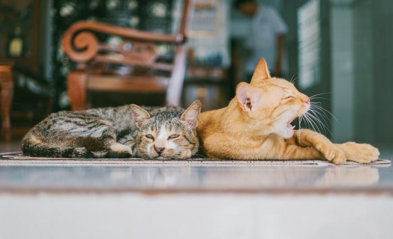 Emergências para Gatos Mansões Santo Antônio - Emergência Animal