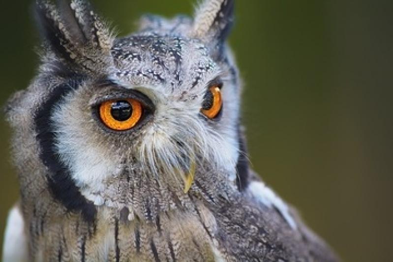 Encontrar Veterinário de Animais Silvestres Residencial Parque Bandeirantes - Veterinário com Internação