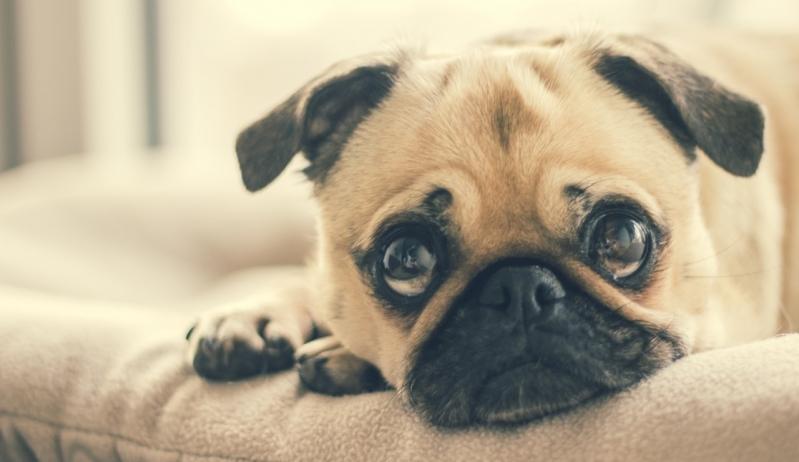 Hospital para Emergência para Cães Jardim Santa Odila - Emergência de Pequenos Animais
