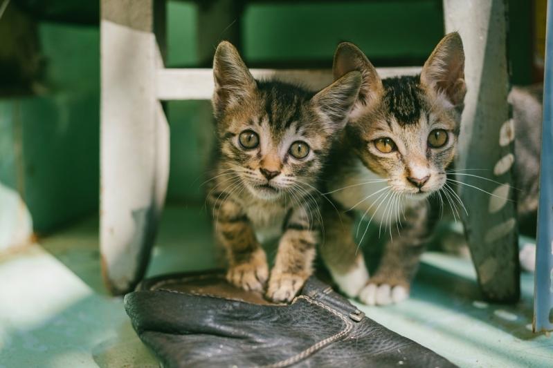 Local de Clínica Veterinária para Animais Jardim Novo Taquaral - Clínica Veterinária para Cachorro