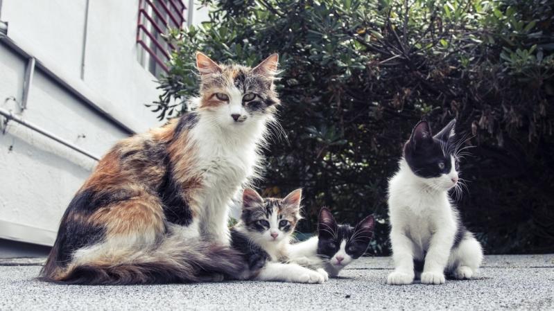 Onde Encontro Clínica Veterinária para Animais Vila Nova São José - Clínica Veterinária para Emergência