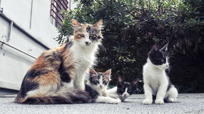 Onde Encontro Clínica Veterinária para Animais Jardim Amazonas - Clínica Veterinária Particular