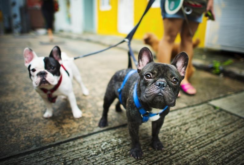 Onde Encontro Clínica Veterinária para Cachorro Jardim Proença - Clínica Veterinária