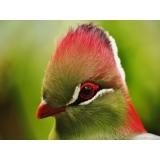 clínica de veterinário de aves Parque Camélias