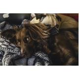 clínica para emergência para cães Parque Oziel