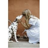 clínica veterinária para cachorro