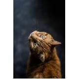 comprar vacina para gatos Parque Oziel