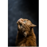 comprar vacina para gatos Vila Nova