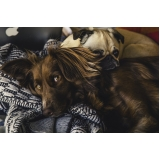 comprar vacina veterinária v10 para cães Parque das Flores