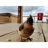 consulta veterinária para aves de emergência Jardim Campo Belo II