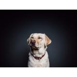 consulta veterinária para cachorro de emergência Residencial Parque Bandeirantes