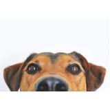 consulta veterinária para cães de emergência Vila Iza