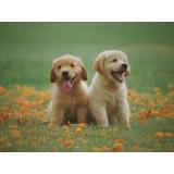 consulta veterinária para cães pequenos de emergência Vila Proost de Sousa