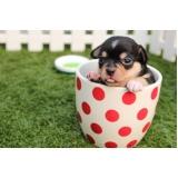 consulta veterinária para cães pequenos Chácara Gargantilha