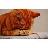 consulta veterinária para gato de emergência Jardim Samambaia