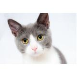 consulta veterinária para gato Chácara Gargantilha