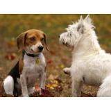 consulta veterinária com internação