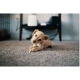 consulta veterinária para cachorro