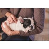 consulta veterinária para cães pequenos