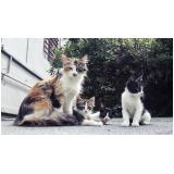 consulta veterinária para gato