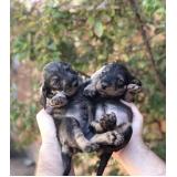 consultas veterinárias para cães pequenos Jardim Von Zuben