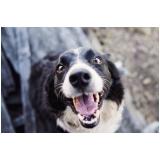 consultas veterinárias para cães Vila Nova