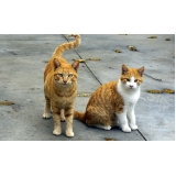 consultas veterinárias para gato Vila Rossi e Siqueira