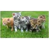 emergência em pequenos animais Vila Mimosa