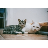emergência para gatos valores Jardim Bom Retiro