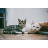 emergência para gatos valores Jardim Itamarati