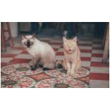 emergência para gatos Jardim Pacaembu