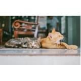 emergências para gatos Jardim Eulina