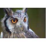 encontrar veterinário animais silvestres Parque Fazendinha