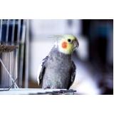 encontrar veterinário de animais exóticos Jardim Bandeirantes