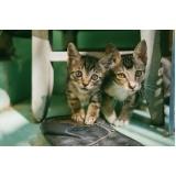 local de clínica veterinária para animais Vila Iza